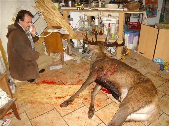 Cerf abattu dans le salon : les veneurs condamnés