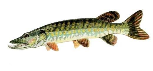Au domaine dAstrakhan ont interdit la pêche