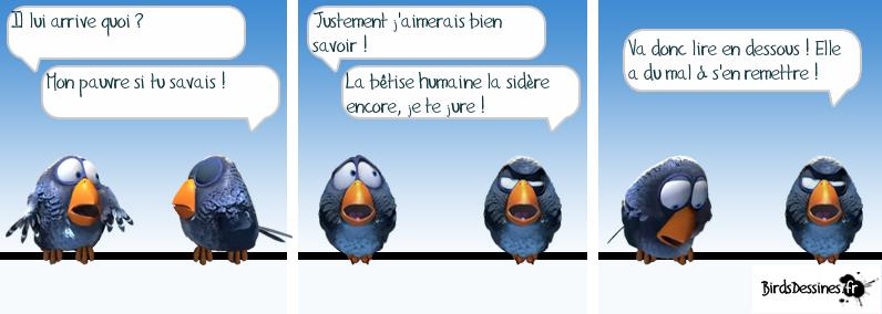 http://i80.servimg.com/u/f80/09/02/08/06/oiseau11.png