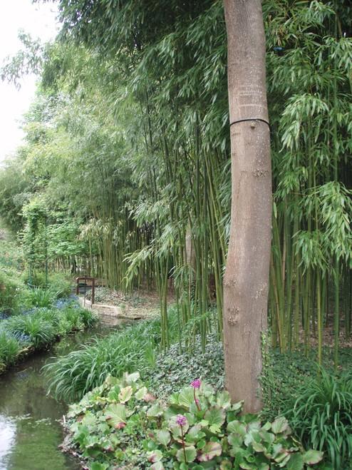 bambou11