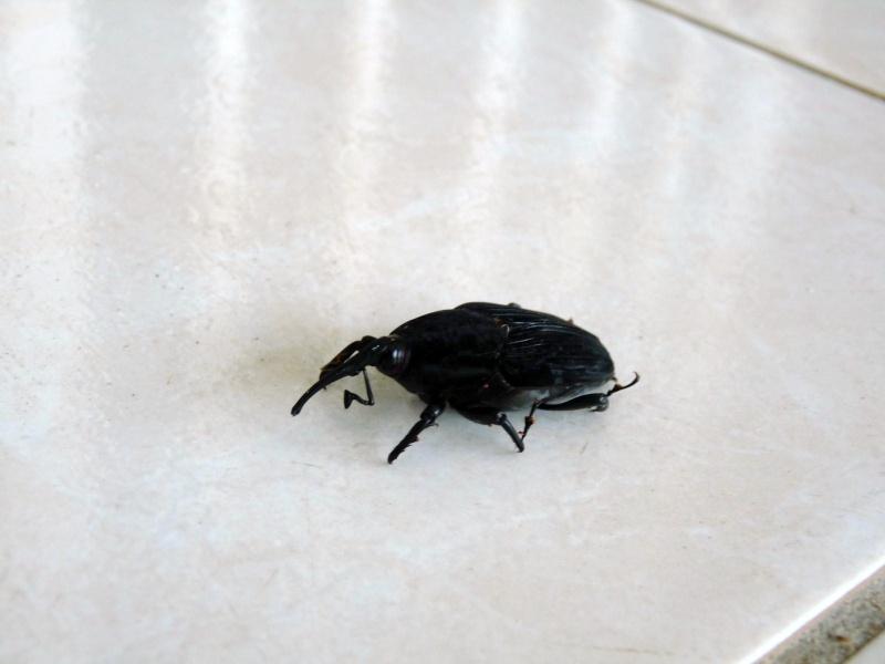 insectes - balades en guyane et au brésil
