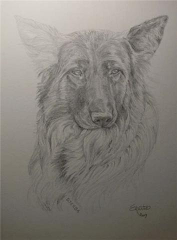 Dessins de chiens page 3 - Dessin de chien berger allemand ...