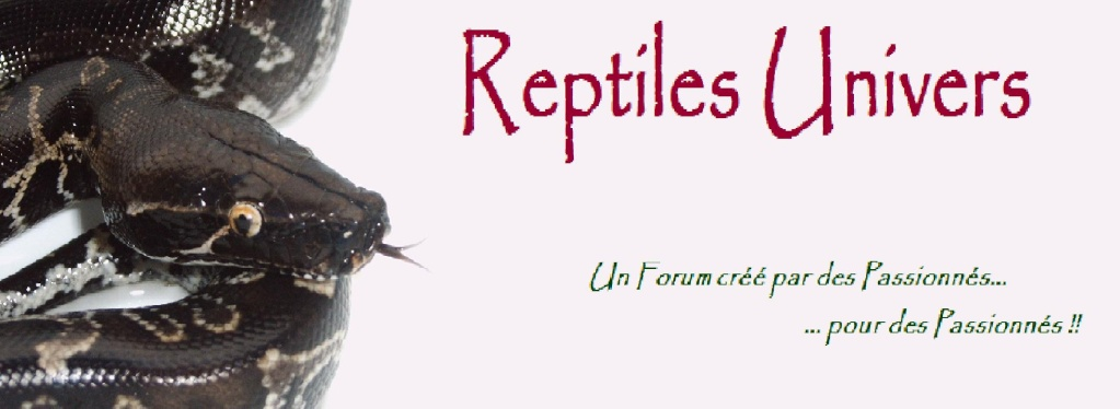 Forum Reptiles Univers