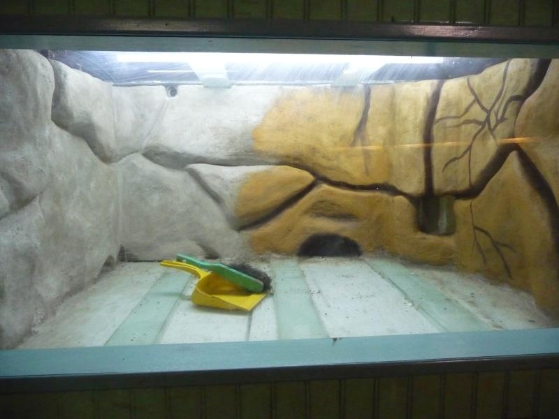 décor aquarium sikatop