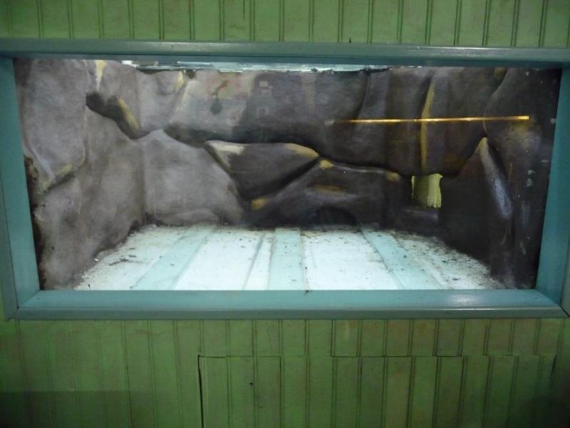 décor relief aquarium