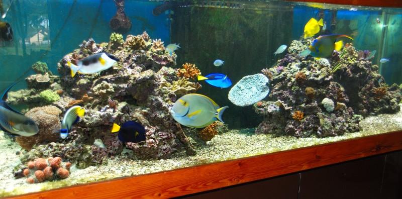 décor aquarium fish only