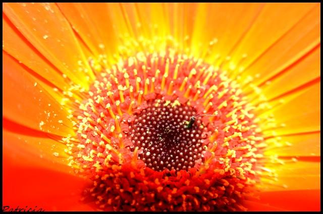 dsc_0043 dans fleurs