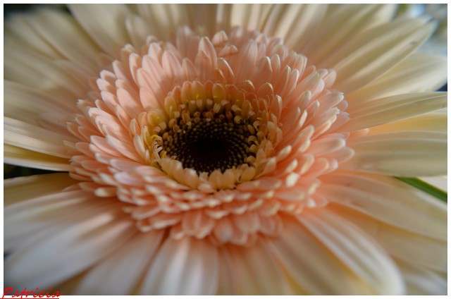 dsc_0046 dans fleurs