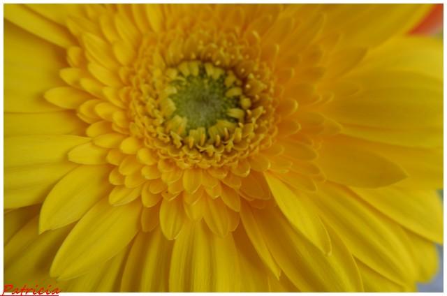 dsc_0055 dans fleurs