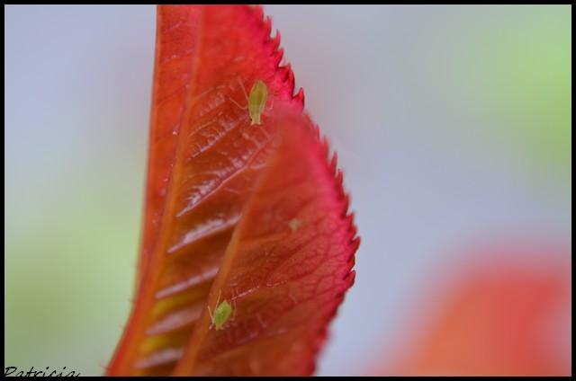 dsc_0061 dans nature