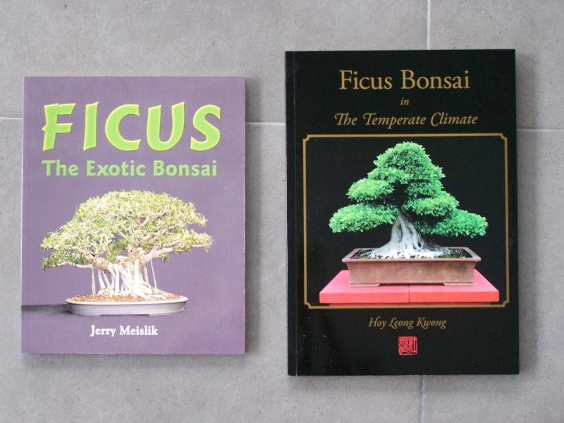 bonsai ficus perd ses feuilles