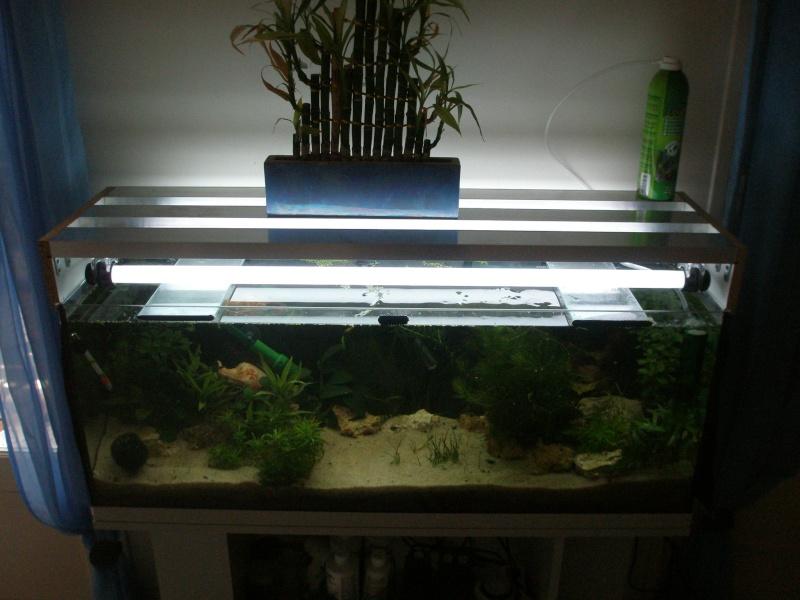 Fabriquer Un Aquarium En Bois - fabriquer un aspirateur pour aquarium 28 images comment nettoyer aquarium webnature fr