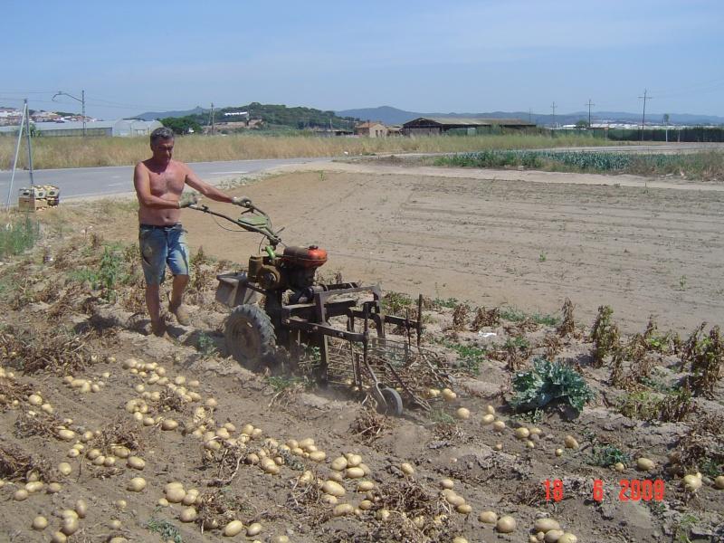 R colte de pommes de terre la c te de barcelone - Pomme de terre recolte ...