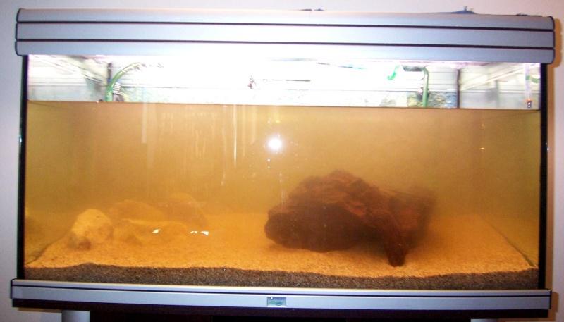 Plantes abim es for Filtre aquarium 20l