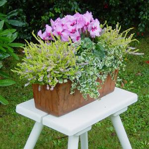quelles fleurs pour jardinieres d hiver. Black Bedroom Furniture Sets. Home Design Ideas