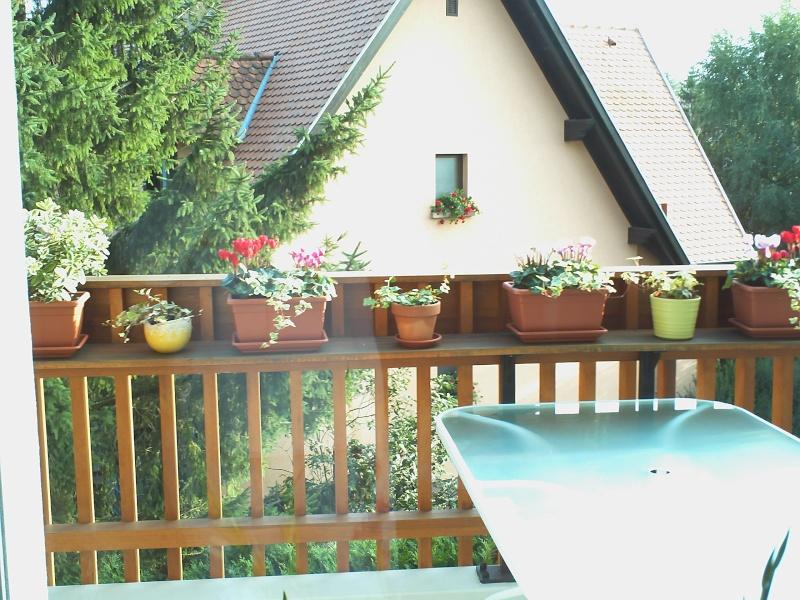 Quelles fleurs pour jardinieres d hiver for Balconniere hiver