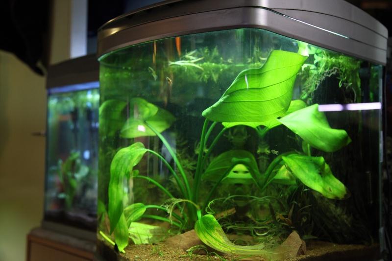 rena bio3, 60 litres reel