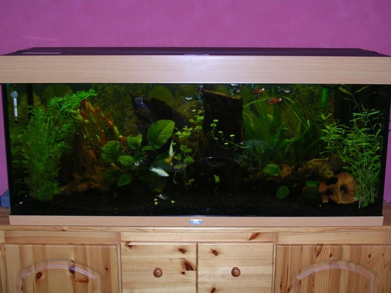 mon nouveau aquarium 240 litre. Black Bedroom Furniture Sets. Home Design Ideas