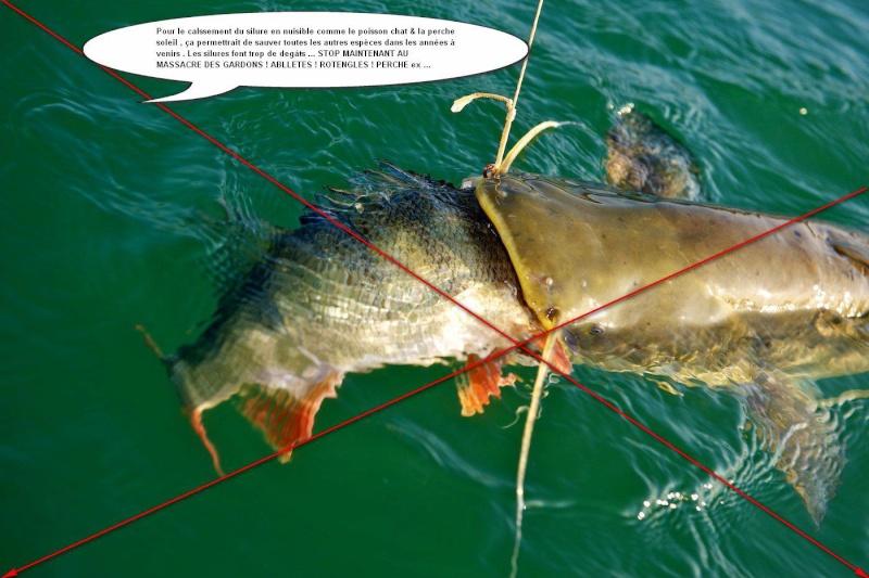Les compétitions selon la pêche à desnogorske