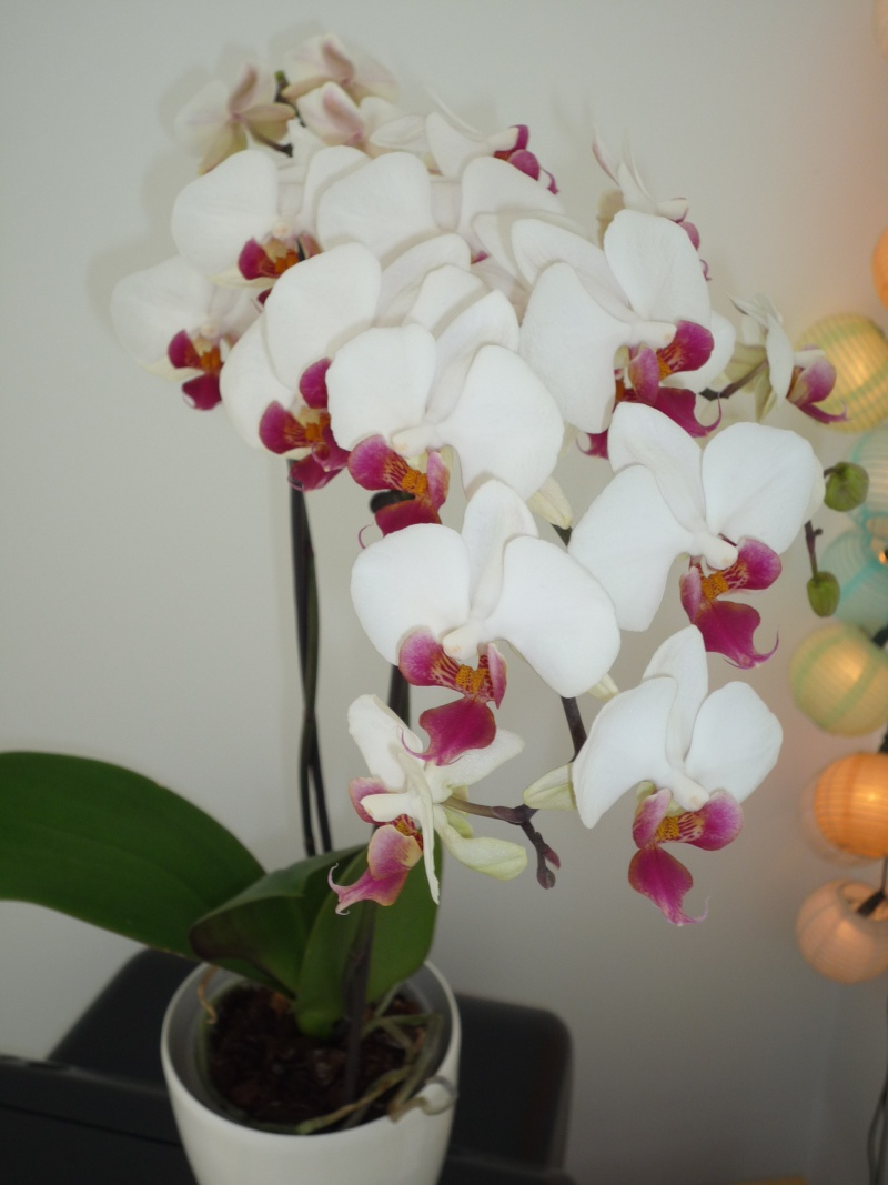 Fleur longue tige my blog - Fleur blanche longue tige ...