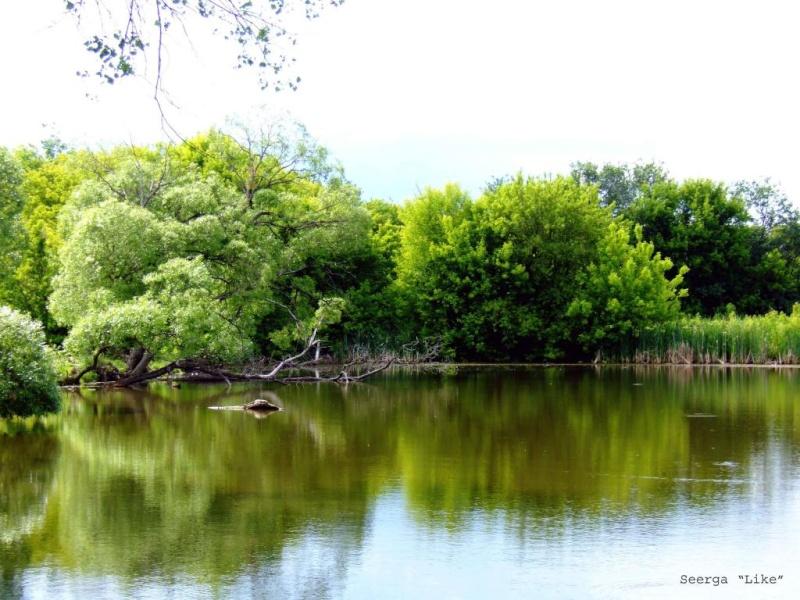 рыбалка на прудах в собинском районе
