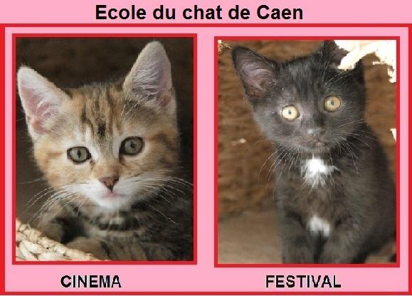cinema et festival chatons de deux mois ecole du chat de