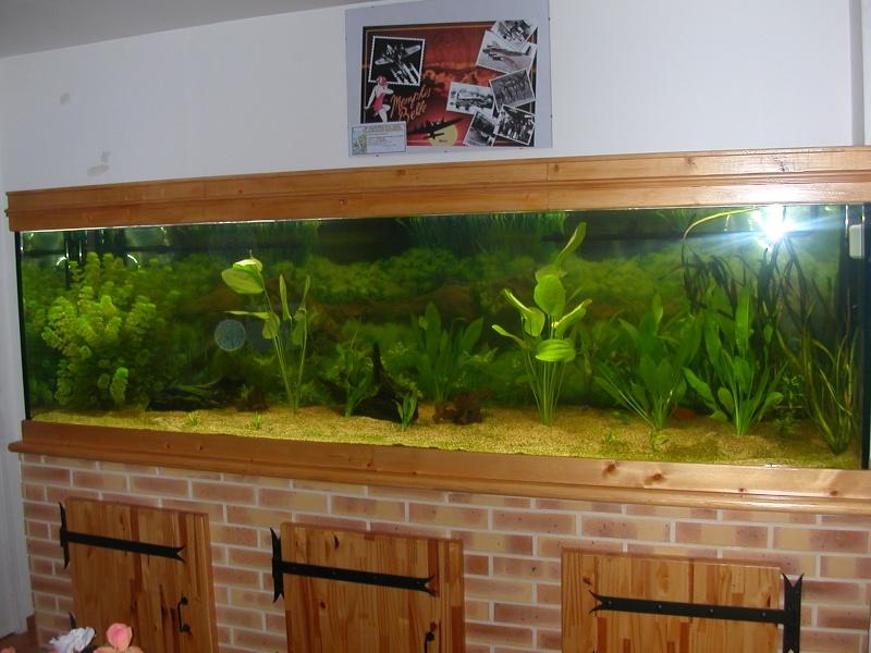 aquarium eau douce 1000 litres