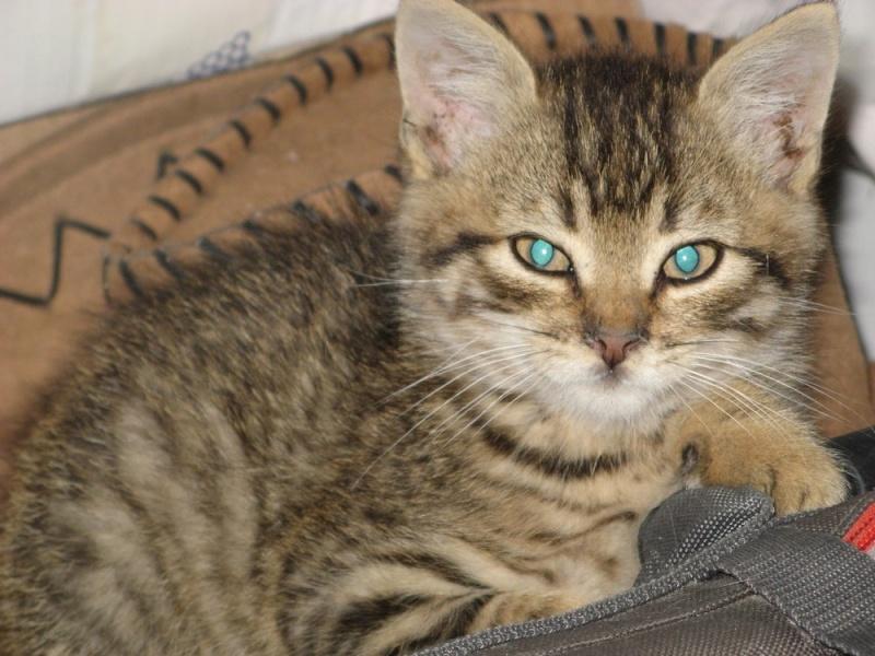 Faire stériliser un chat gratuitement
