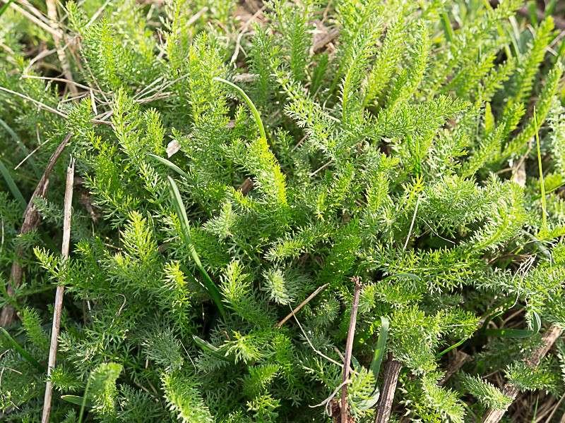 Découverte des plantes printani u00e8res en sous bois de feuillus # Plantes De Sous Bois Liste