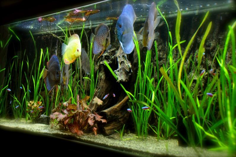 Aquarium 600l discus plant e for Aquarium 600l