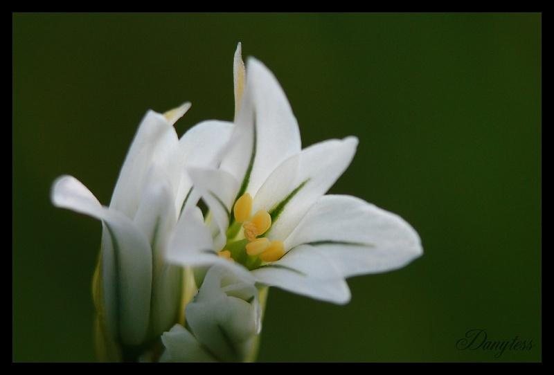 Objectif Non Specifie Petites Fleur Blanche