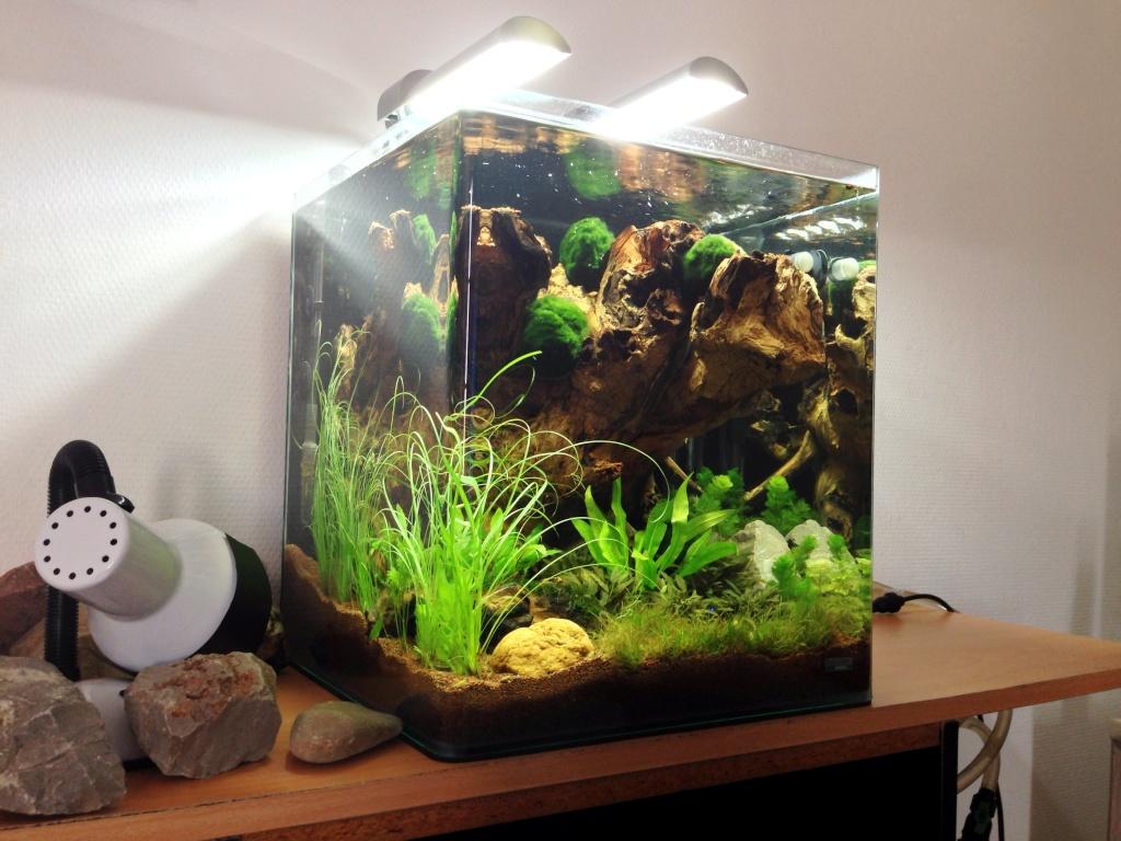 Nano cube dennerle 60l for Poisson aquarium 60l