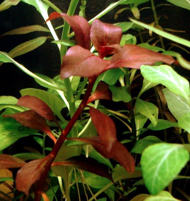 Plante rouge plante vert fonc lesquelles prendre for Plante rouge