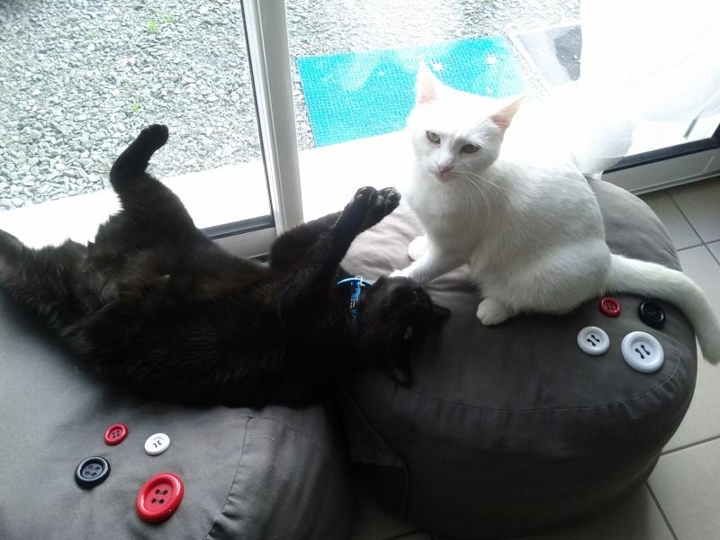 Idylle sa nouvelle maison et son nouveau copain for Adaptation chat nouvelle maison